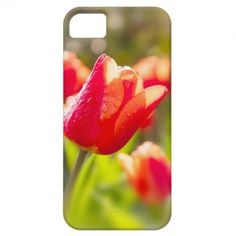 Red Tulips iPhone 5 Cover $42.95