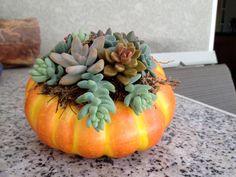 succulents in a pumpkin,  halloween arrangement, fall arrangement, hostess gift, table top. Cute!