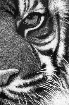 scratchboard tigre by Roman-Novikov on deviantART - Tiere - Animals Kratz Kunst, Animal Drawings, Art Drawings, Tiger Art, Tiger Drawing, Tiger Sketch, Sketch 2, Scratchboard Art, Scratch Art