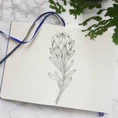 Well, I'm still learning how to draw by googling and pinteresting drawings ok?! This is my attempt at a protea. My mum grew these in her garden when I was knee-high to a grasshopper ☺ #bulletjournal #bujo #bulletjournaljunkies #bujojunkies #planneraddict #bulletjournallove #bulletjournalcommunity #bulletjournaltracking #bulletjournalsociety #bulletjournalshowcase #bujotown #bujoinspiration #bujobeauties #bujoinspire #bulletjournalss #drawing #sketch #wearebujo #bulletjournaling #protea… Bullet Journal Tracking, Bullet Journal Junkies, Learn To Draw, Photo And Video, Bujo, Drawings, Sketch, Paintings, Illustrations