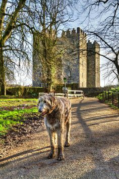 Bunratty Castle, County Clare