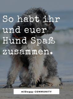 || #Hund || Ideen || #Hunde || Tipps || Tricks || Ideen || Liebe || Welpen || Bilder | #Beschäftigung