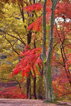 ✯ Autumn Colors for the month of Oct and Nov it's the beauty of the trees during these months.