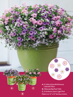 "Container Gardens made easy! For a Springy, pastel look, plant the following in our 16"" or 20"" Bombay container:  A. 3 Calibrachoa MiniFamous Lavender Blue B. 3 Bacopa Big Pearl Falls C. 3 Verbena Lascar Light Pink"