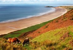 Horses at Rhossili Beach by Anthony Thomas