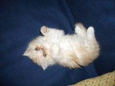 señales corporales de los gatos