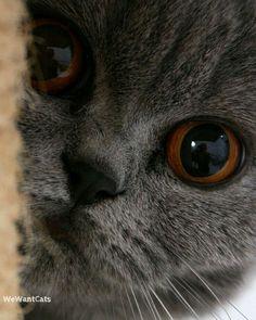 Spycat by wewantcats
