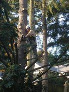Erik Nye the Tree Guy
