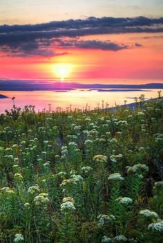 """drxgonfly: """"cadillac mountain sunrise aug 29 2010 (by Nate Parker Photography) """" Acadia National Park, National Parks, Sunrise Photography, See The Sun, Peace On Earth, Beautiful Sunrise, Artistic Photography, Graphic Design Inspiration, Nature Pictures"""