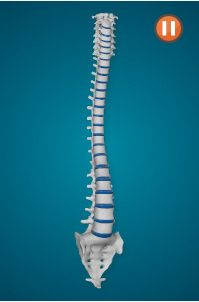 Share this cool interactive spine animation on your chiropractic website, free!  Get the code and add this to your website today