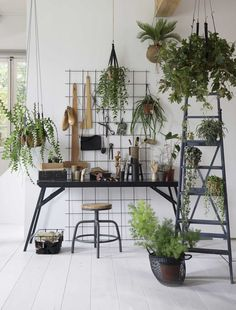 Workspace with hanging plants