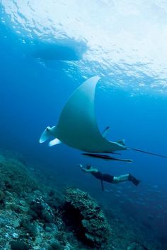 7 Top Diving Havens in Indonesia: 1. Raja Ampat - West Papua #garudamagazine