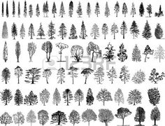 Illustration about Vector illustration of tree silhouettes. Illustration of landscape, environment, conifer - 8079190 Tree Silhouette Tattoo, Silhouette Vector, Tree Sketches, Stock Foto, Tree Art, Pyrography, Vector Art, Vector Trees, Vector Stock
