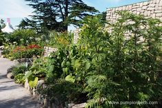 The Journey Latin America's Inca Garden at the RHS Hampton Court Palace Flower…