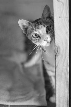 Cat photo: Pixels Pet Photography