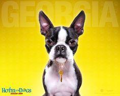 10 Best Hotel For Dogs Images Dog Hotel Dog Boarding Kennels