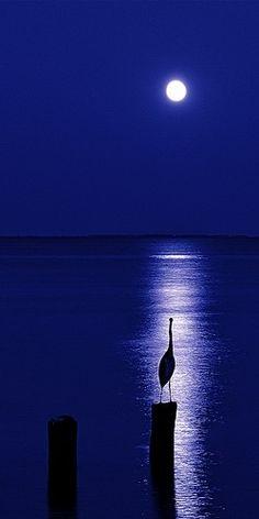 New Nature Photography Night Moonlight La Luna 31 Ideas Beautiful Moon, Beautiful World, Beautiful Places, Beautiful Pictures, Beautiful Scenery, Simply Beautiful, Shoot The Moon, Blue Moon, Night Skies