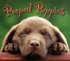 Pooped Puppies 2013 Boxed Calendar CB-9033