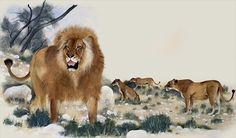 size: Giclee Print: Maurice Wilson Art Print by Maurice Wilson : Artists Frame My Photo, Biology Art, Wilson Art, Photo Canvas, Animal Paintings, Find Art, Mammals, Lions, Giclee Print