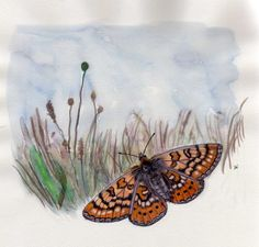Outra borboleta FANTÁSTICA, da autoria de Luísa Ferreira Nunes, que terá o seu lugar no próximo DN 2014, a lançar já em finais de Outubro!....:)