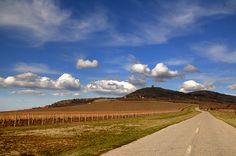 Vineyards, Vrsac, Serbia - Vrsac, Vojvodina