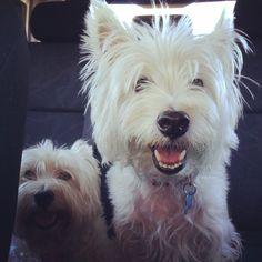 Gracie and Duke love car rides