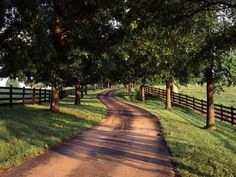 Tree-Lined Winding Road and Fences at First Light Between Pastures, Kentucky, USA Photographic Print by Adam Jones Tree Lined Driveway, Rock Driveway, Gates Driveway, Driveway Repair, Long Driveways, Future Farms, Farm Life, My Dream Home, Dream Barn
