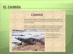 Proyecto La selva amazónica
