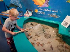 Bailey Matthews Shell Museum- more than 30 exhibits featuring shells and mollusks from all over the world. Photo by Debi Pittman Wilkey.