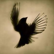 bird tattoo - Google-søk