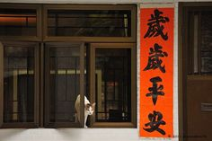 Photograph Cats in Hong Kong by Micros Yip on 500px