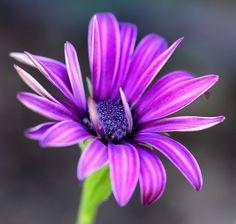 DSC - Daisy Flower | by Sultann on 500px