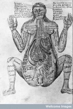 "15th century illustrations of the human body from ""Claudius Pseudo ..."