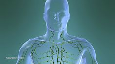The lymphatic system - How it works and why cleansing it matters