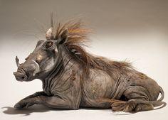 Warthog Sculpture - Nick Mackman Animal Sculpture