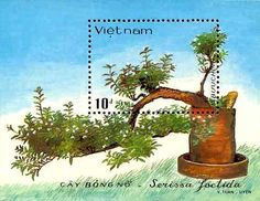 Bonsai on Postage Stamps, Vietnam
