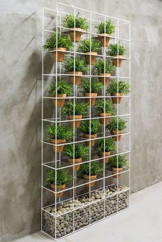 gabion based/ vertical garden