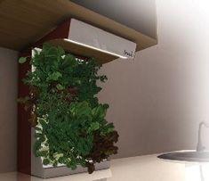 Resultado de imagen para tipos de huerto vertical