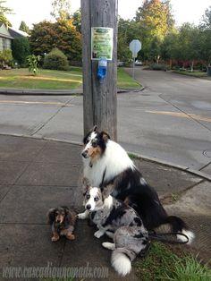 D.I.Y. Poop Bag Dispensers: Help your neighbors keep the environment free of disease ridden dog waste! #ScoopThatPoop