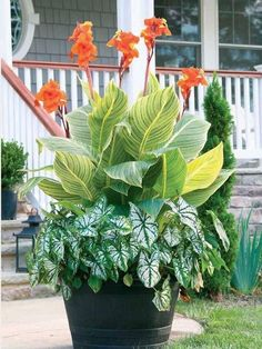 How To Prune Hostas Pinterest Plants Gardens And Planting