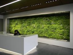Recent living green wall installed by Ambius in Portland, OR.