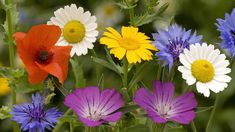 Celestialflyer - ★★★Featured Puzzles★★★(THE CREDIT BELONGS TO THE SOURCES!!!) - Colours of nature... Spring Flowers, Wild Flowers, Free Online Jigsaw Puzzles, Spring Wallpaper, Flower Backgrounds, Pansies, Beautiful Flowers, Photo Gifts, Bloom