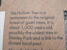 Vancouver's urban rain forest - Review of Stanley Park, Vancouver, British Columbia - TripAdvisor