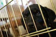 Animal cruelty cases in Albany are languishing, putting strain on shelters, costing taxpayers money, and keeping animals from finding a forever home. Demand authorities crack down on animal cruelty now.