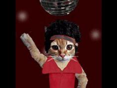 ▶ 70's Top Disco & Divas Diana Thelma Gloria Donna - YouTube