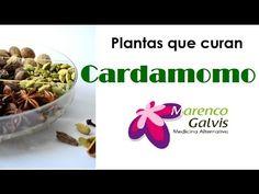 Plantas que curan: Cardamomo, Propiedades y Beneficios /Medicina Alterna...