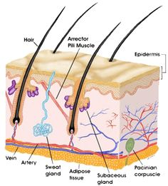 Http Www Google Com Images Q Kids Cell Membrane In Animal Cell