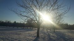 Winterwunderland Erfurt