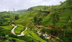 Central Sri Lanka & Adam's Peak