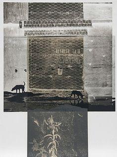 Robert Rauschenberg, Lily Scent, 1981